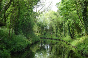 Shannon Boat Hire Gallery - Cruising the Canal