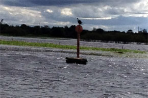 Shannon Boat Hire Gallery - A buoy and a bird on the river...