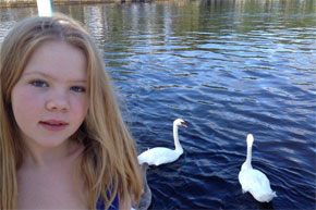 Shannon Boat Hire Gallery - More moochy swans - got any bread?
