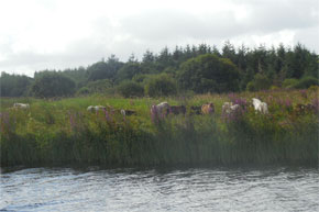 Shannon Boat Hire Gallery - Stealth horses, native to Leitrim