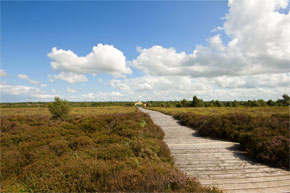 The centre interprets an Iron Age bog road that was built in the year 148 B.C. across the boglands of Longford, close to the River Shannon.