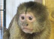Stop monkeying around!